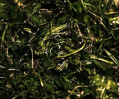 Rezept, Spirulina mit Salat