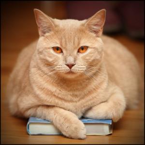 Katze mit einem Buch unter den Pfoten