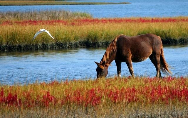 Spirulina für Pferde