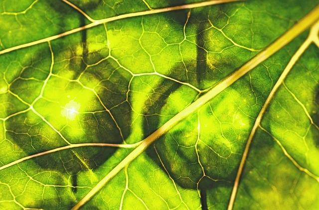Grüne Smoothies mit viel Chlorophyll