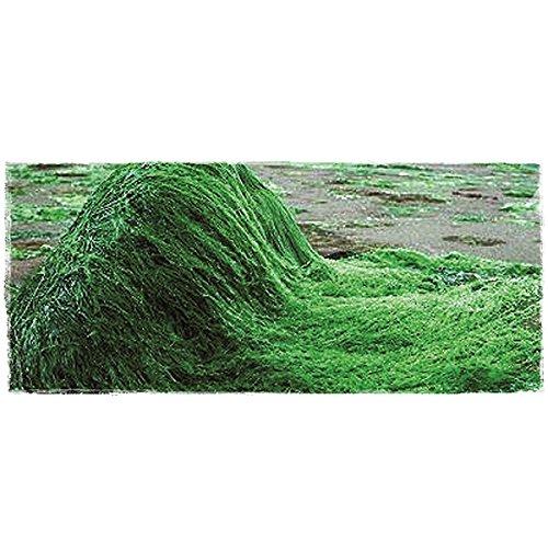 Boswelia Spirulina Presslinge 100 g / circa 250 Stück, 1er Pack -
