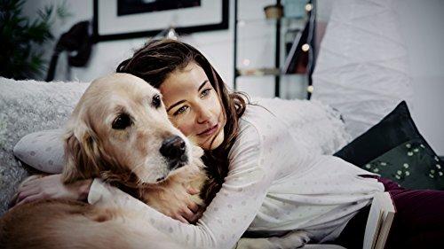 Burma Spirulina Chips DOG - Nahrungsergänzungsmittel Für Hunde I Für Ein Starkes Immunsystem, Vitalität Und Glänzendes Fell I Premium Nahrungsergänzung Für Tiere 90g -